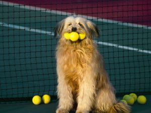 Tennis, Anyone_